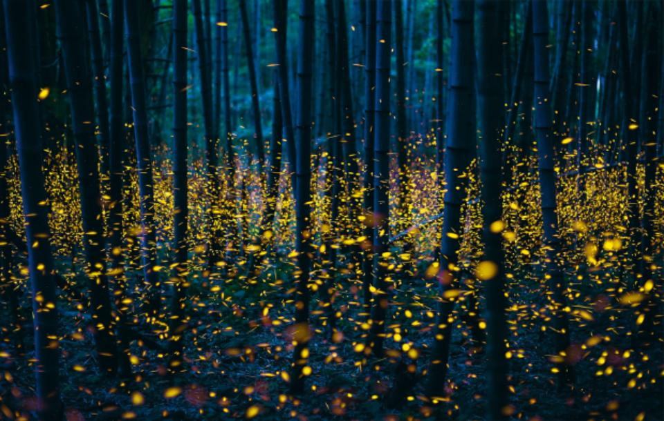 Gluehwuermchen Leuchten Wald