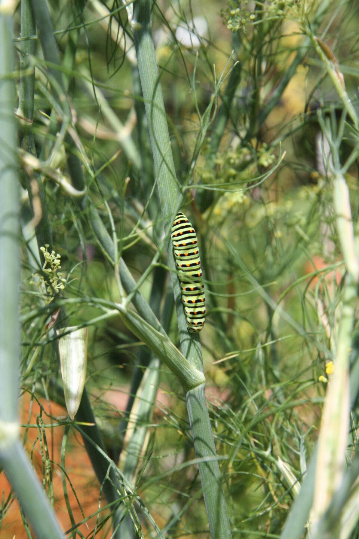 Mario Knecht Gartengestaltung Insekten