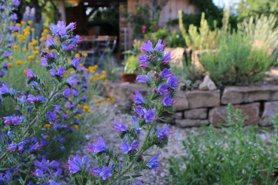 Wildblumen Natternkopf Ii Mario Knecht Gartengestaltung Basel