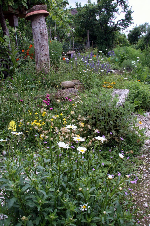 Wildblumensaat Im Kies Beim Spielbereich Und Treppenaufgang