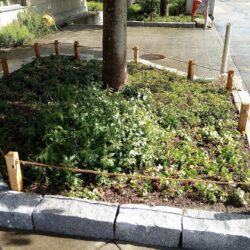 Rabatteneinfassung Gartengestaltung Basel